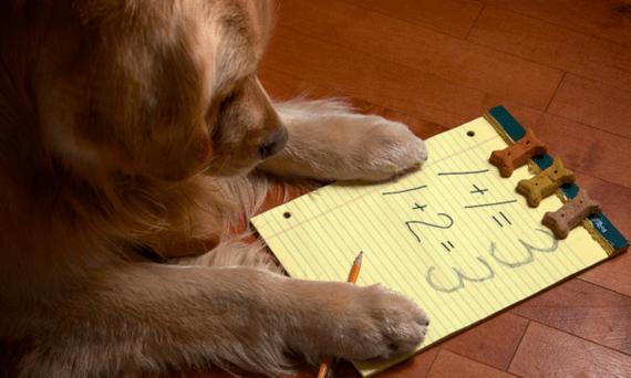 2016-12-01-1480628671-3499732-doggiemath.PNG