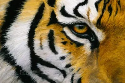 Eye Of The Tiger Canvas Art Print By Lucie Bilodeau