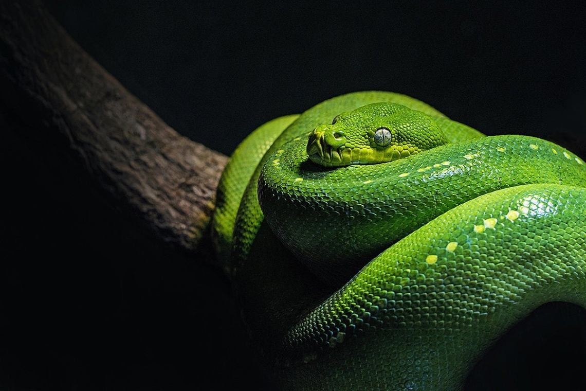 How to manage Python projects with Pipenv