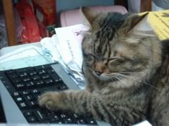 貓咪打電腦