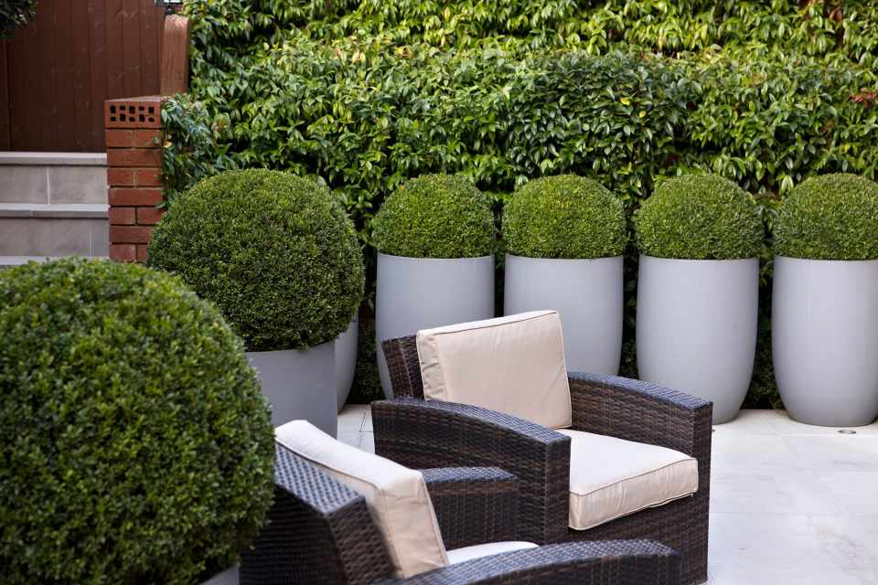 Tips for Designing a Courtyard Garden - BBC Gardeners ... on Tree Planting Ideas For Backyard id=35270