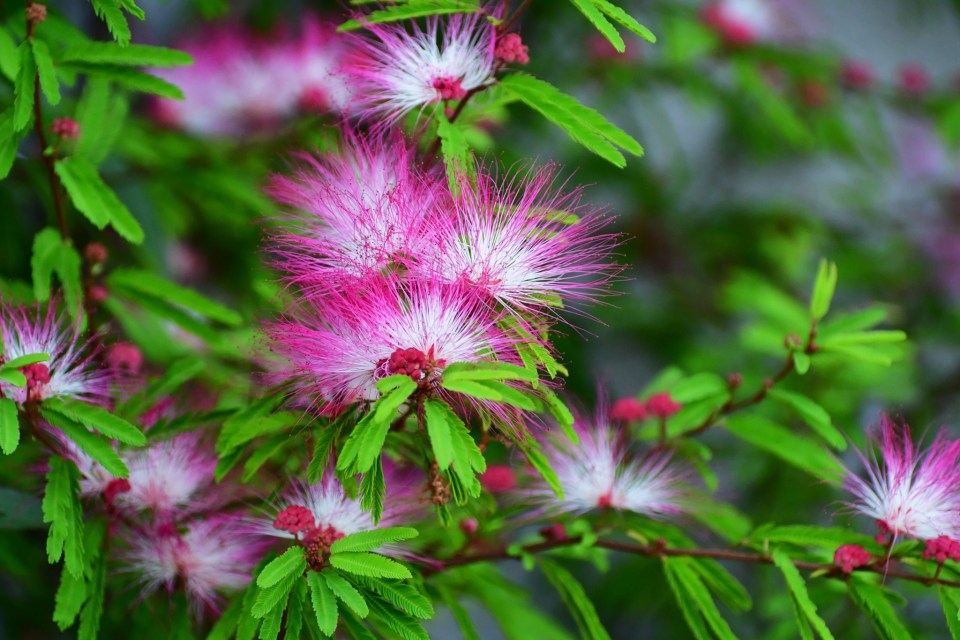 eight of the best trees to grow in pots bbc gardeners world magazine