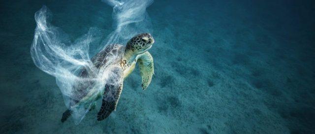 Ocean plastics smell like food to turtles - BBC Science Focus Magazine