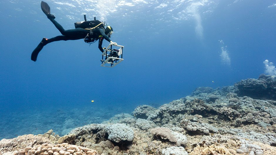A researcher SCUBA diver swims up and down the coral reef with a camera