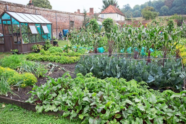 starting a new vegetable patch gardenersworld on 54 Without Planning In A Beautiful Gardening id=14074