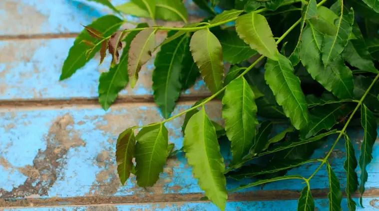 neem water, health beenfits of neem water, neem for skin, neem immunity, indian express news