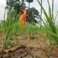 India - The invisible women farmers