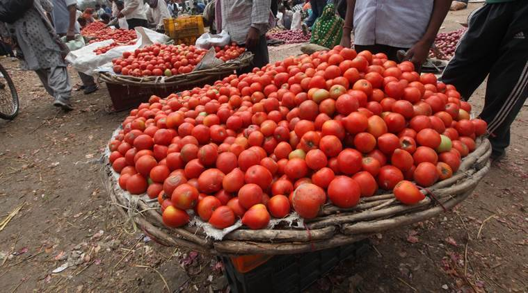 Seeing red: why is tomato on fire?