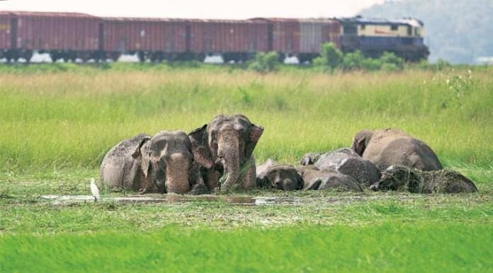 forest guard killed by elephants, forest guard trampled to death, karnataka forest guard killed by elephants, karnataka forest guard killed
