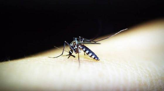 India saw the largest reduction in malaria cases in Southeast Asia between 2000 and 2019: WHO