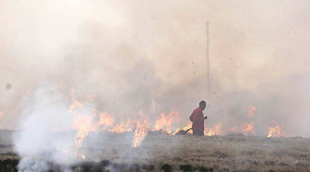 Rs 2 crore fine, Rs 4.15 lakh recovered: PPCB data on Punjab farm fires