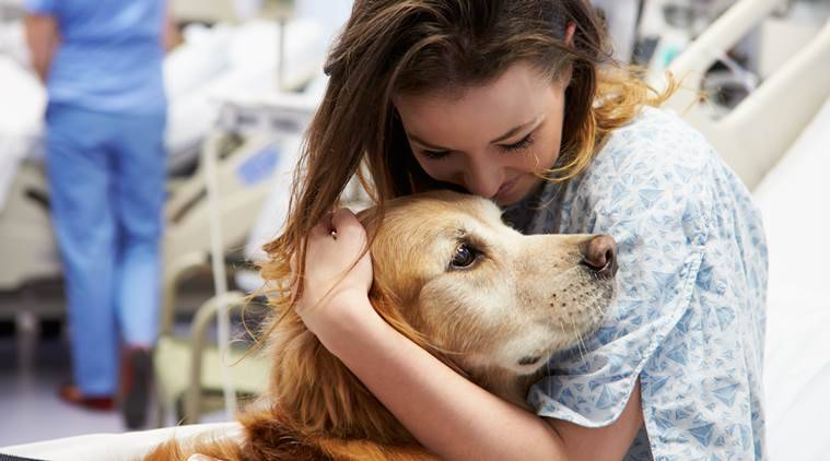 therapy dogs, healthcare workers, stress, stress buster, managing stress, doctors and nurses, health, indian express, indian express news