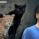 Meet The Wildlife Photographer Whose Photo Of Black Panther Leopard Couple Is Going Viral Trending News The Indian Express