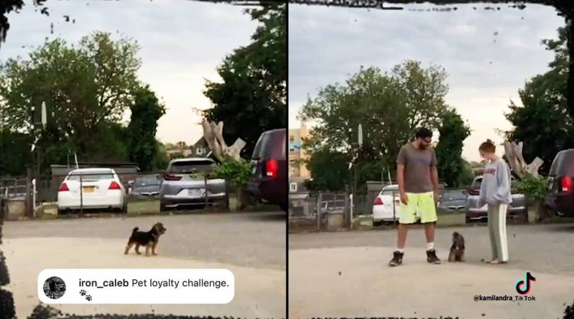 This 'Run in Opposite Directions' TikTok challenge has couples testing their dog's loyalty