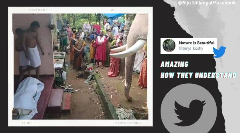 Watch: Heartwarming video of elephant bidding farewell to mahout who died of cancer