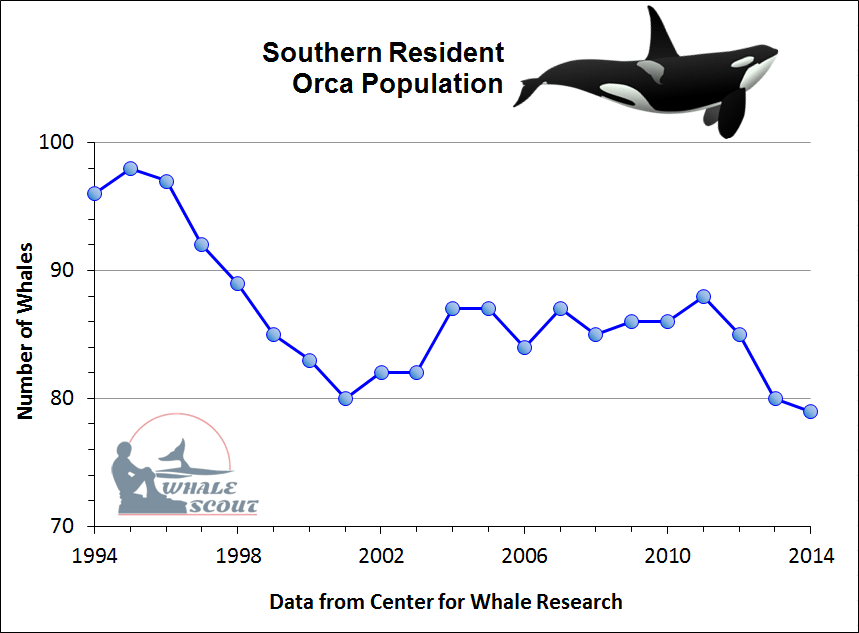 Image result for whale population decline