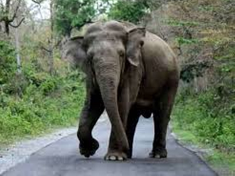 हाथी ने स्कूली छात्र को कुचलकर मार डाला