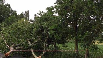 DIRECT. Orages en Occitanie : au moins deux blessés dont un enfant, le trafic TER partiellement interrompu