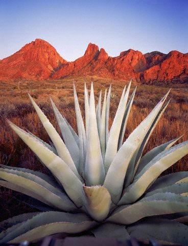 Desert Landscaping Plants Amp Irrigation Landscaping Network