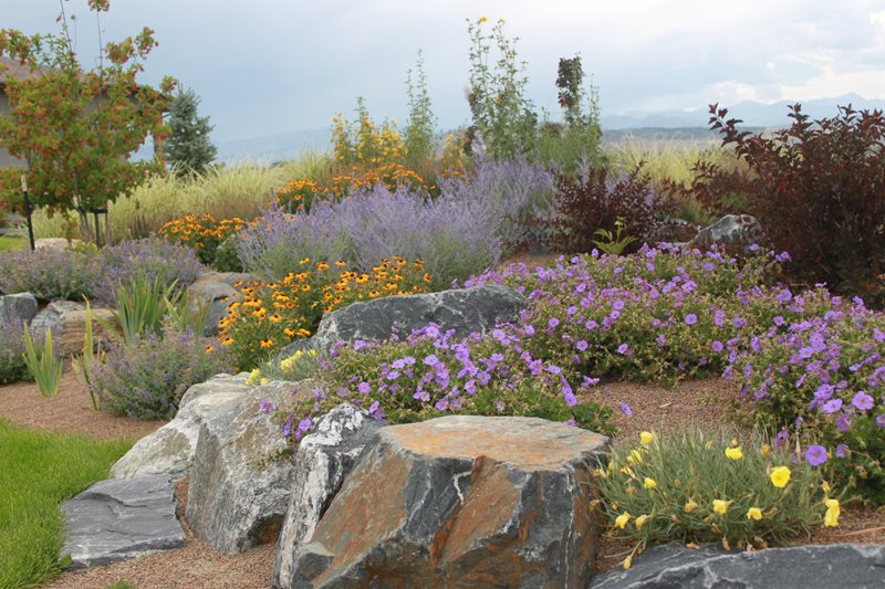 Recently Added - Longmont, CO - Photo Gallery ... on Xeriscape Backyard Designs  id=79636