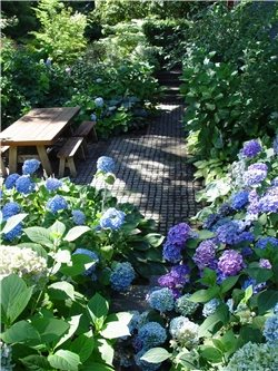 Solutions for Shady Yards - Landscaping Network on Shady Yard Ideas id=31603