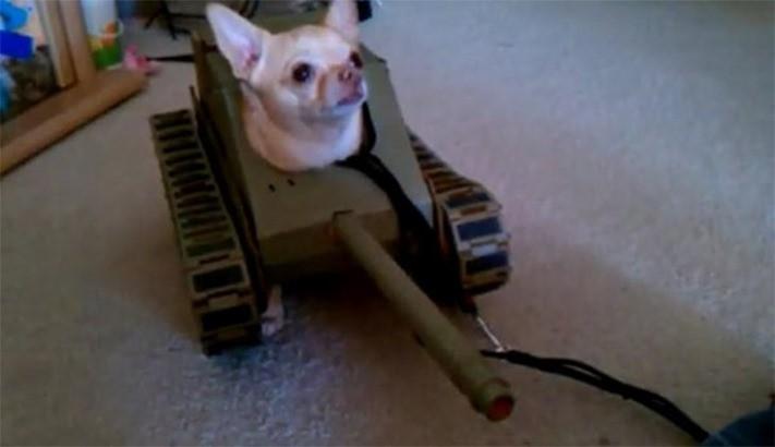 tankdog