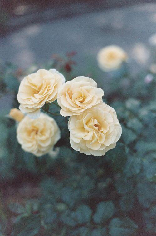 Petite fleur (7)