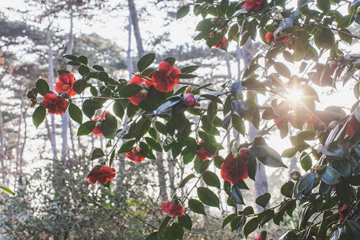 Parc floral de Vincennes-36