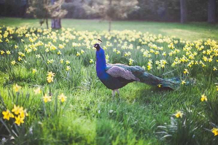 Parc floral de Vincennes-40