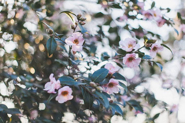 Parc floral de Vincennes-50