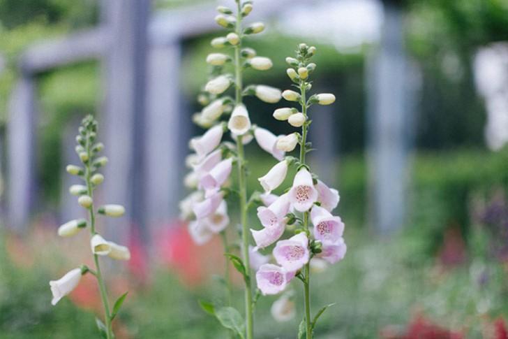 jardin bercy-3