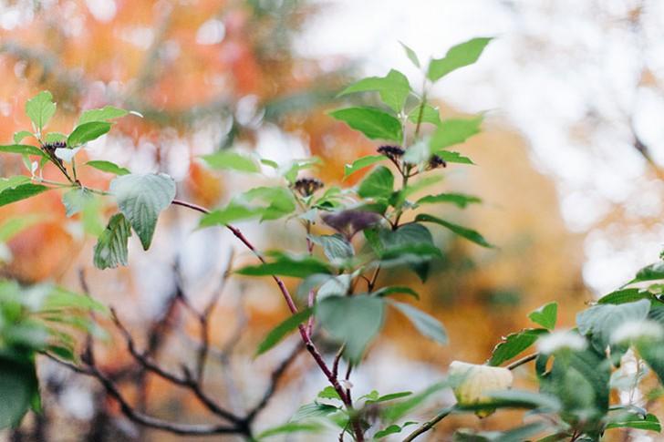 automne-26