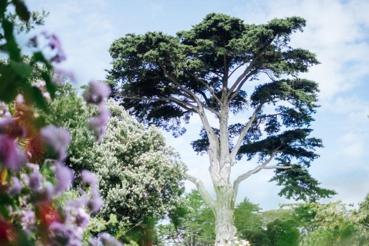 Botanical-garden00001