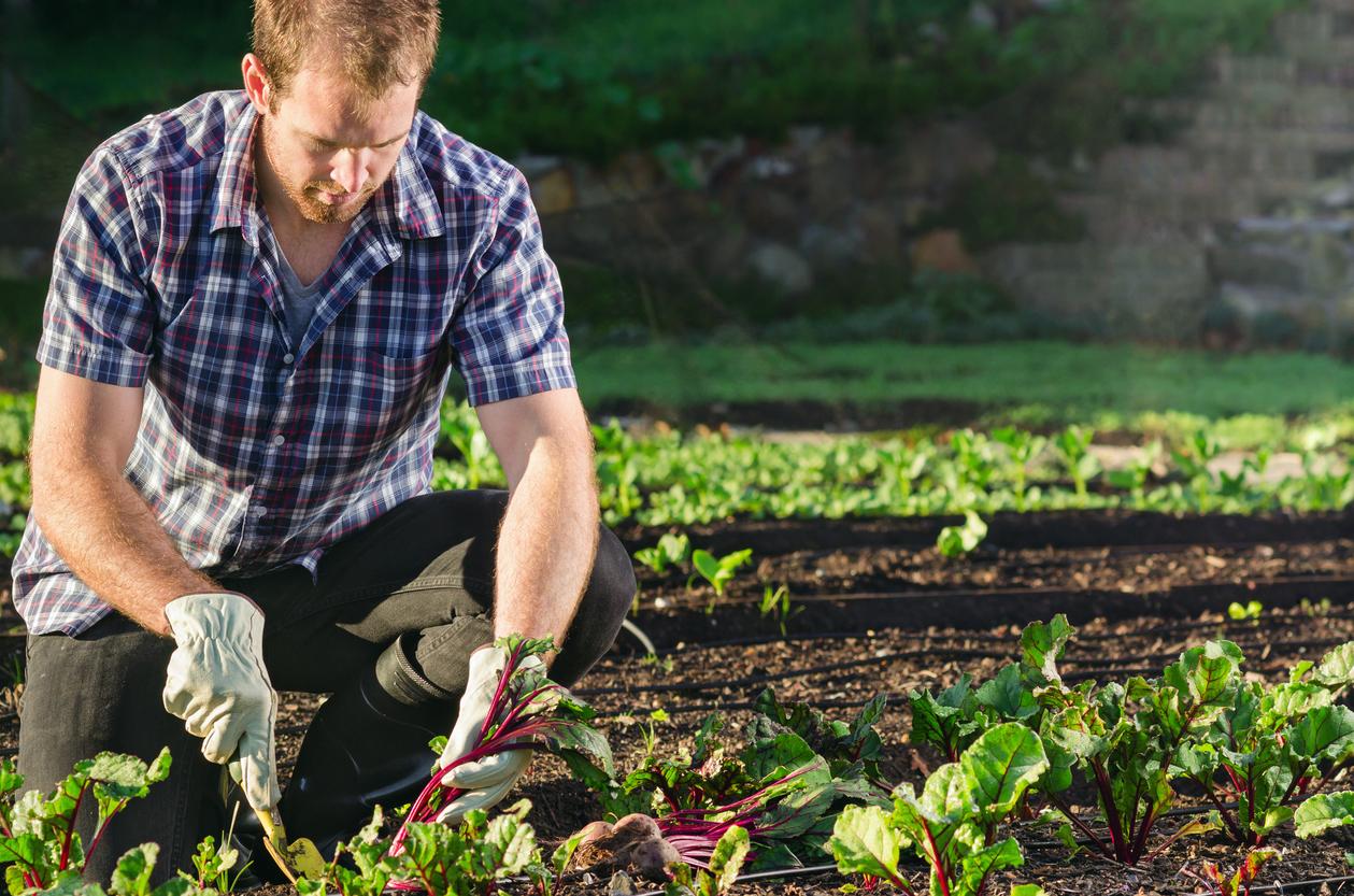 Università: nasce un corso di laurea per esperti di semi e piante