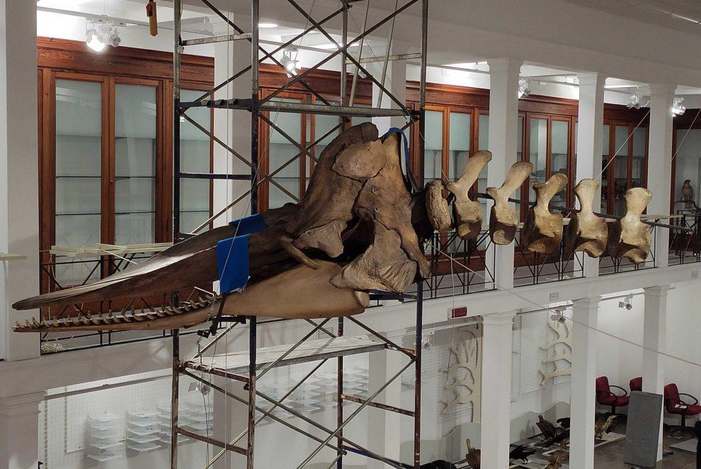 museo zoologia catania