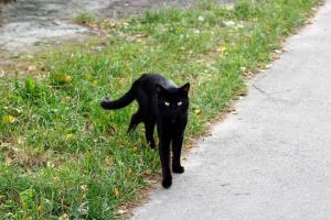 gatto-catania