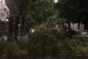 albero in mezzo alla strada in via sant'euplio