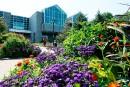 L'Université Laval expulse la Société des Amis du Jardin VandenHende