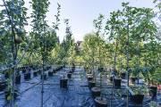 Croque Paysage cultive les plantes sans pesticides ni... (Photo fournie par Croque Paysage) - image 2.0
