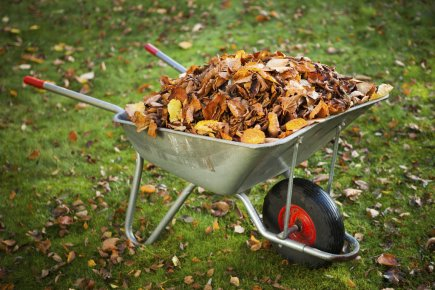 «Pourquoi ramasser les feuilles mortes? Dame Nature ne les ramasse pas...»,... (Photos.com)