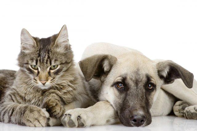 Un chien ou un chat qui souffre de... (PHOTOTHÈQUE LA PRESSE)