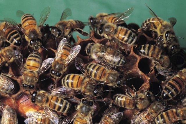 Un essaim d'environ 30000 abeilles a attaqué un couple du nord du Texas alors... (PHOTO FOURNIE PAR PHOTOS.COM)