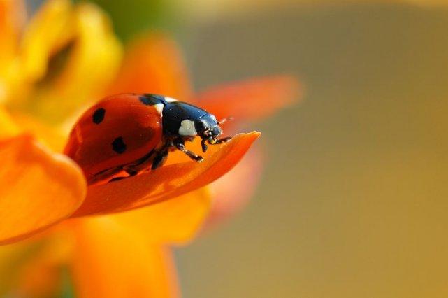 Et si on utilisait des insectes plutôt que des produits chimiques pour se... (Photo AFP)