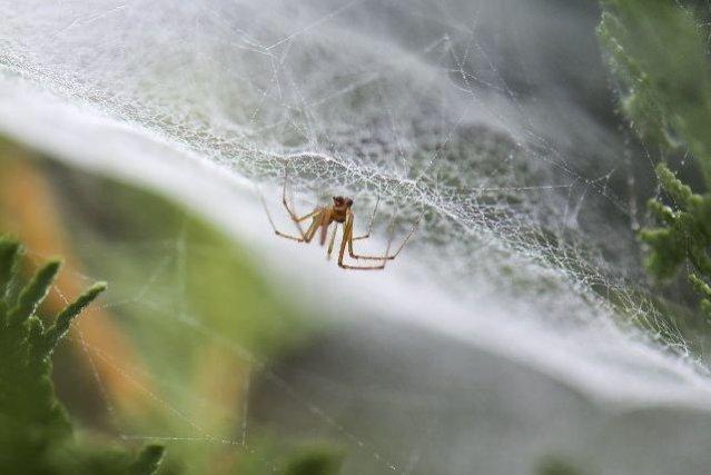 De la soie d'araignée, de minuscules tubes de carbone, un peu d'eau et beaucoup... (Photo AFP)