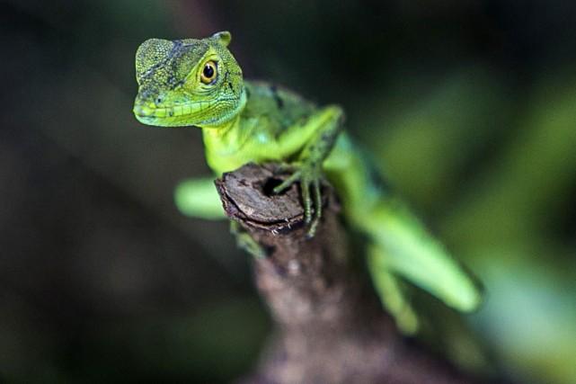 Au Nicaragua, pays d'Amérique centrale parmi les plus... (Photo Inti OCON, AFP)