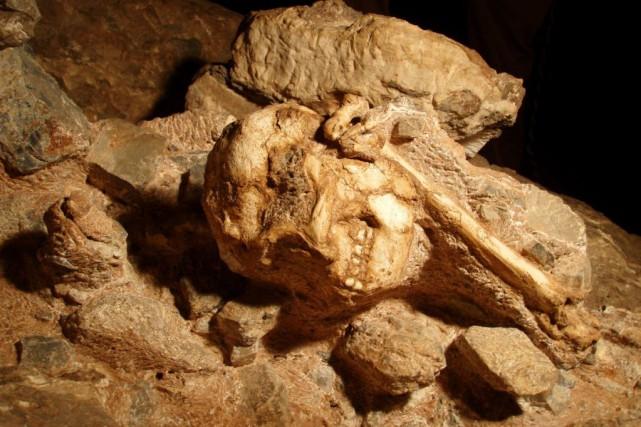 Depuis la découverte de Little Foot («Petit pied»)... (Photo LAURENT BRUXELLES, archives AFP)
