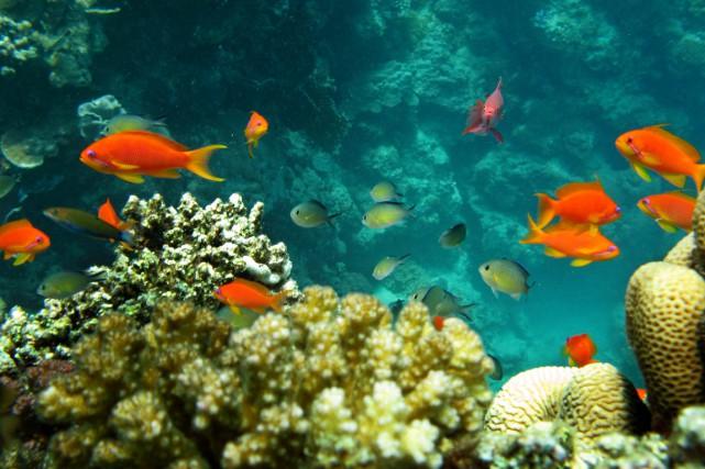 Les auteurs ont estimé les changements de biodiversité... (PHOTO HASSAN AMMAR, ARCHIVES AFP)