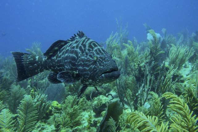 Les poissons peuvent souffrir de lésions internes et... (Photo Todd Heisler, archives The New York Times)