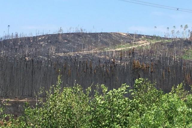 On dénombre 357incendies de forêt depuis le début... (PHOTO TIRÉE DU COMPTE TWITTER DE LA SOPFEU)