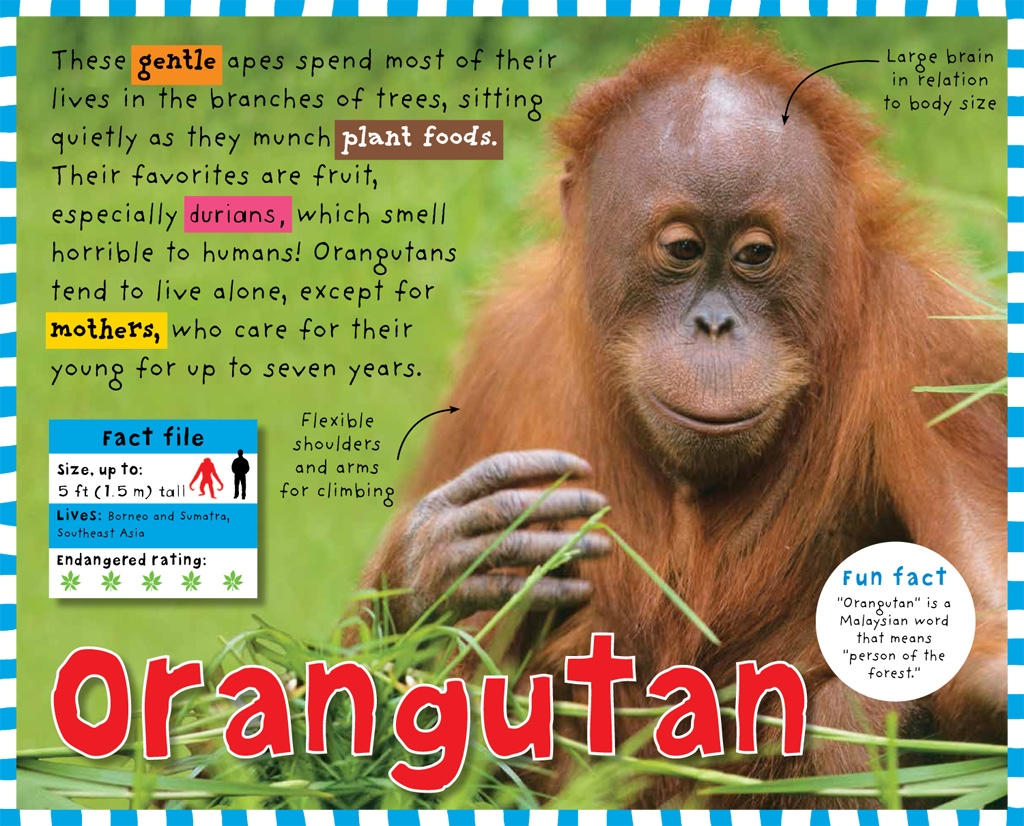 Smart Kids Rainforest
